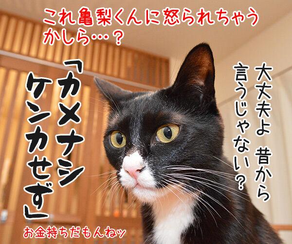 MCあずきのヒップホップ大喜利 猫の写真で4コマ漫画 4コマ目ッ