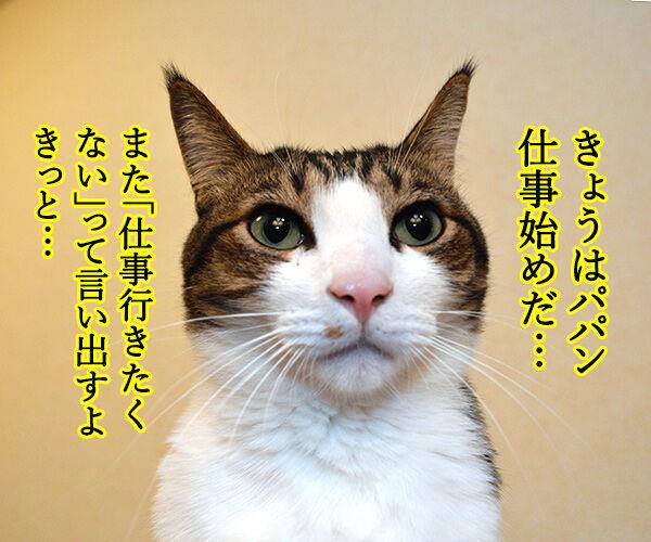 きょうから仕事始めだから 猫の写真で4コマ漫画 1コマ目ッ