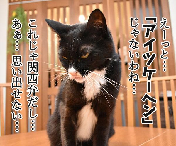 アウフヘーベン 意味は辞書で調べるのよッ 猫の写真で4コマ漫画 3コマ目ッ