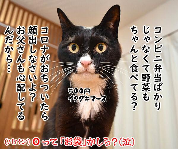あずだいマートでお買い物 其の四 猫の写真で4コマ漫画 4コマ目ッ