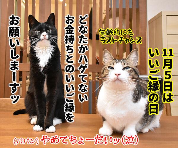 あずきとだいずをよろしくお願いしまーすッ 猫の写真で4コマ漫画 4コマ目ッ