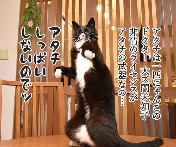 大ズ門未知子は一匹にゃんこのドクターなのッ 猫の写真で4コマ漫画 1コマ目ッ