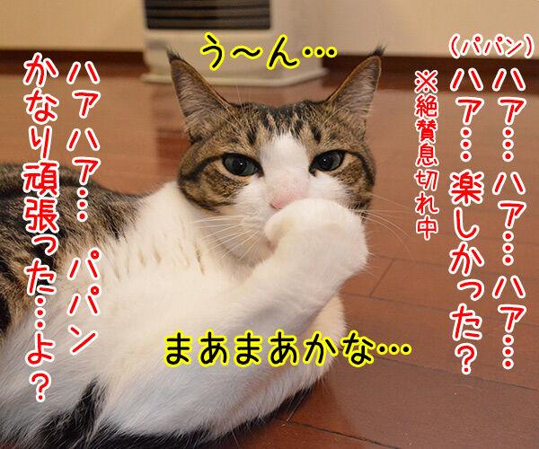 ねこと遊ぶということ 猫の写真で4コマ漫画 3コマ目ッ