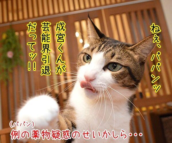 成宮くんが芸能界引退するんですってッ 猫の写真で4コマ漫画 1コマ目ッ