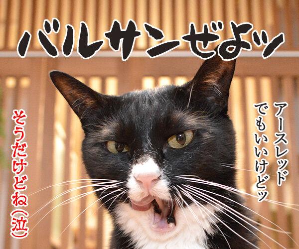ゴキブリが出たらあのヒトを呼ぶのよッ 猫の写真で4コマ漫画 4コマ目ッ