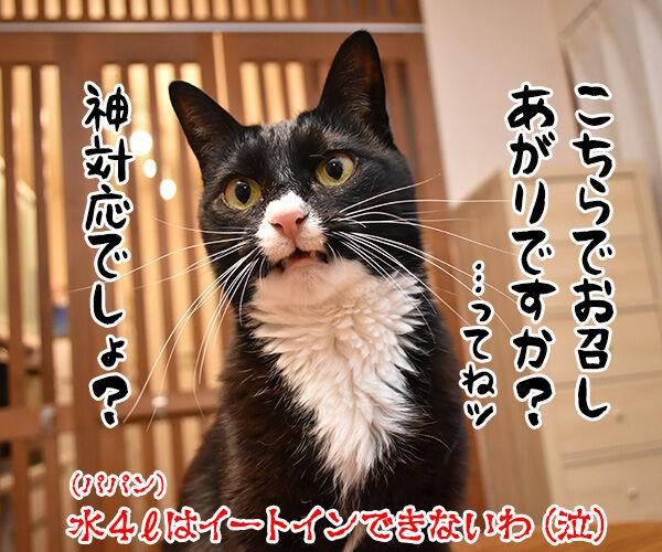 コンビニの袋詰めの話なのよッ 猫の写真で4コマ漫画 4コマ目ッ