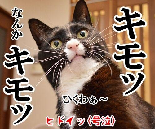 愛してるって言って 猫の写真で4コマ漫画 4コマ目ッ