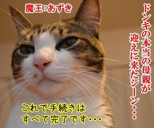 明日、ママがいない 其の二 猫の写真で4コマ漫画 1コマ目ッ