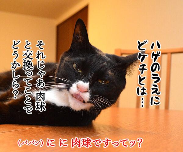 オヤツちょーだいッ 猫の写真で4コマ漫画 2コマ目ッ
