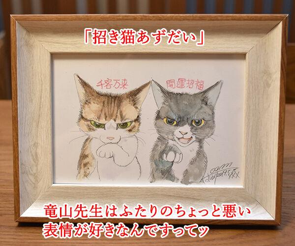 『うちの犬が子ネコ拾いました。』第2巻は6月26日発売なのよッ 猫の写真で4コマ漫画 3コマ目ッ