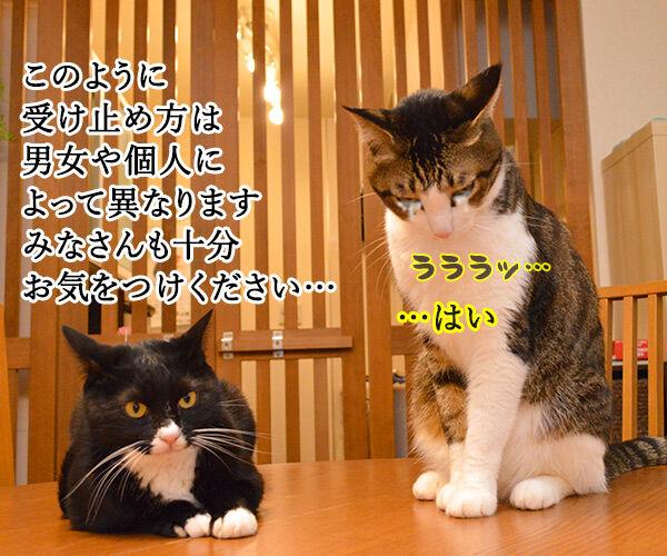 ハラスメントの定義を教えてください 猫の写真で4コマ漫画 4コマ目ッ
