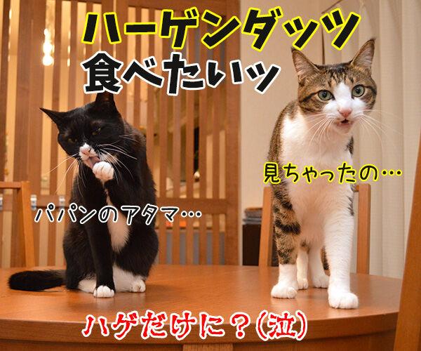あッ… 猫の写真で4コマ漫画 4コマ目ッ