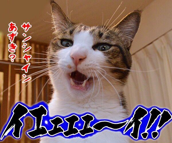 みんなー のってるかーい? 猫の写真で4コマ漫画 4コマ目ッ
