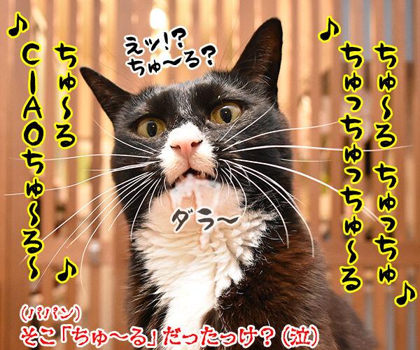 瑛人の「香水」って曲は猫さんも大好きなんですってッ 猫の写真で4コマ漫画 4コマ目ッ