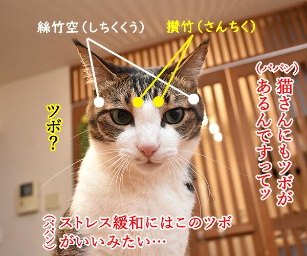 猫さんにもツボがあるんですってッ 猫の写真で4コマ漫画 1コマ目ッ