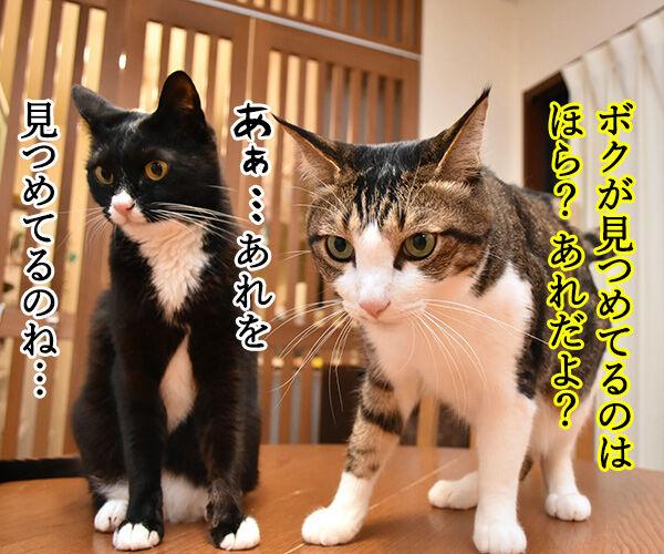あなただけ見つめてる 猫の写真で4コマ漫画 3コマ目ッ