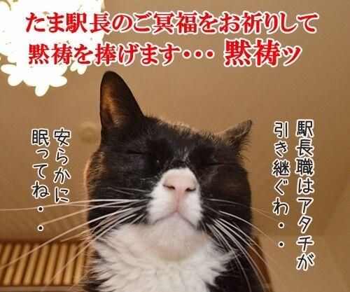 たま駅長のご冥福をお祈りして 猫の写真で4コマ漫画 1コマ目ッ
