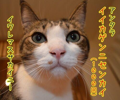 夫婦漫才 ミカとジョージ 其の二 猫の写真で4コマ漫画 3コマ目ッ