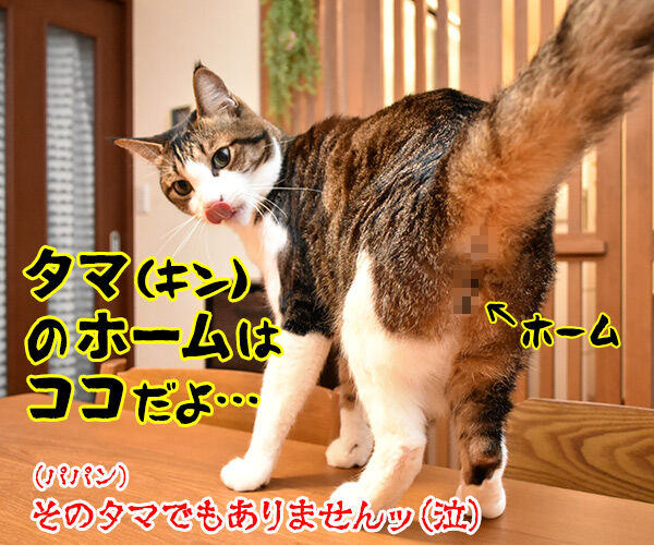 タマホームで建替えしましょうよッ 猫の写真で4コマ漫画 4コマ目ッ