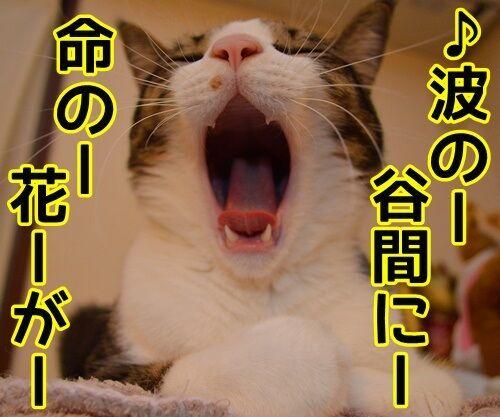 ひとりっこ 猫の写真で4コマ漫画 1コマ目ッ