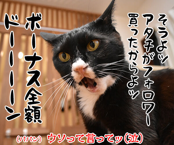 インスタグラムのフォロワーさんが2万人を超えたのよッ 猫の写真で4コマ漫画 4コマ目ッ