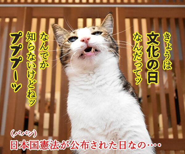 11月3日は「文化の日」で「いいお産の日」なのよッ 猫の写真で4コマ漫画 1コマ目ッ