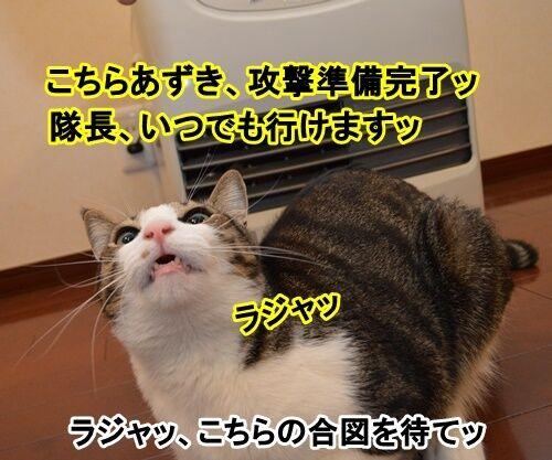 アタック 猫の写真で4コマ漫画 2コマ目ッ