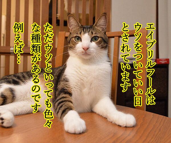 ウソには種類があるんです 猫の写真で4コマ漫画 1コマ目ッ