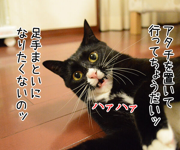 もうダメみたい… 猫の写真で4コマ漫画 2コマ目ッ