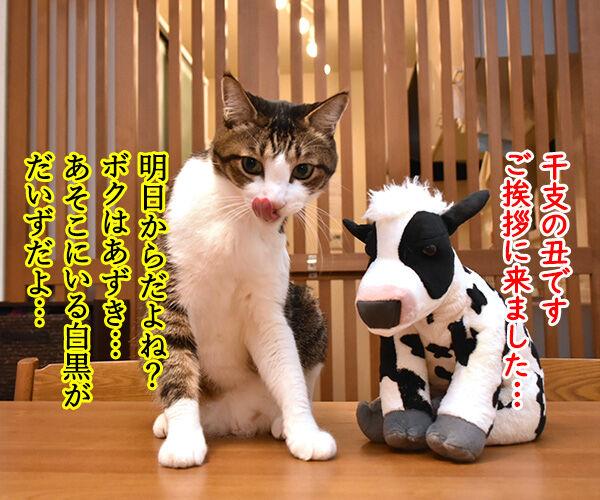 来年の干支の丑さんがご挨拶なのッ 猫の写真で4コマ漫画 1コマ目ッ