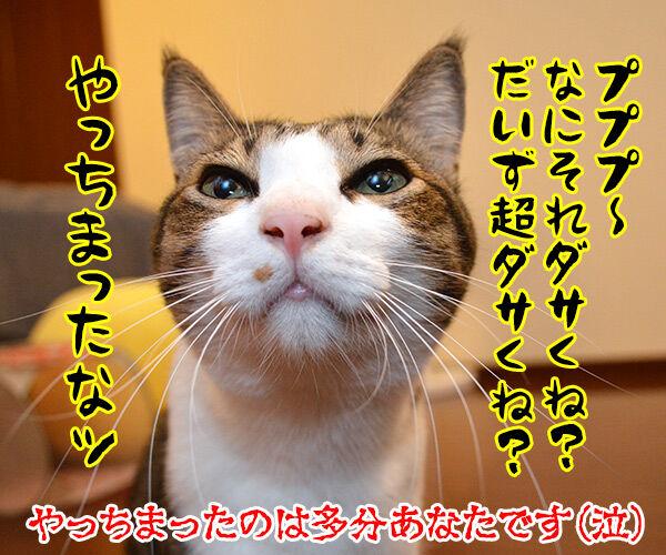 ダサくない? 猫の写真で4コマ漫画 4コマ目ッ