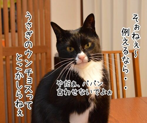 ウンチョス調査 猫の写真で4コマ漫画 2コマ目ッ