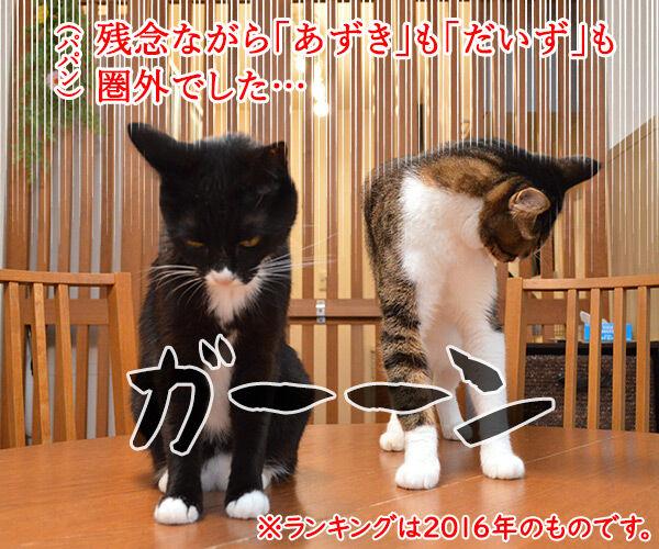 愛猫の名前ランキング発表ッ 猫の写真で4コマ漫画 2コマ目ッ