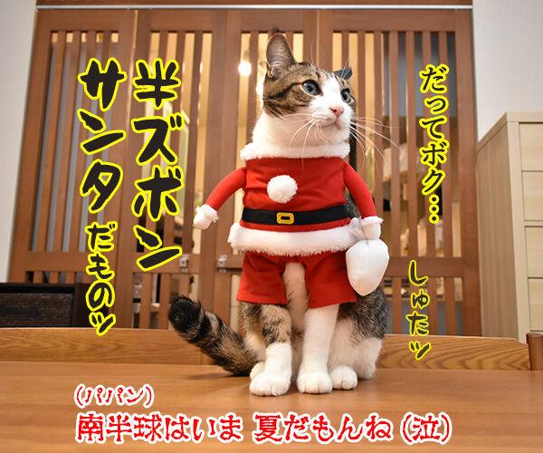 サンタガールとサンタボーイがプレゼントをお届けするわよッ 猫の写真で4コマ漫画 4コマ目ッ