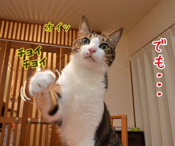 猫なんかよんでもこない。 猫の写真で4コマ漫画 3コマ目ッ