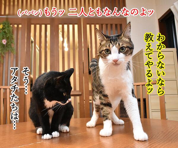 ブラッシングさせてちょうだいッ 猫の写真で4コマ漫画 3コマ目ッ