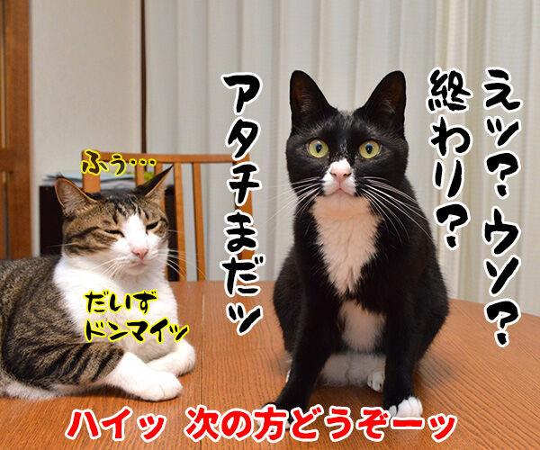 のど自慢大会 其の二 猫の写真で4コマ漫画 4コマ目ッ