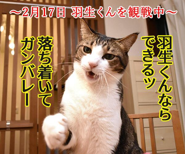 羽生くーんッ ガンバッテーッ 猫の写真で4コマ漫画 1コマ目ッ