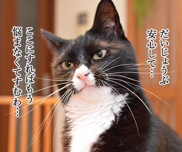 初詣はどこがいいかしら? 猫の写真で4コマ漫画 3コマ目ッ