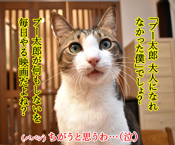 『プーと大人になった僕』を見ようと思うのッ 猫の写真で4コマ漫画 2コマ目ッ