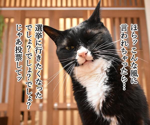 『若者よ、選挙に行くな』って動画があるんですってッ 猫の写真で4コマ漫画 3コマ目ッ