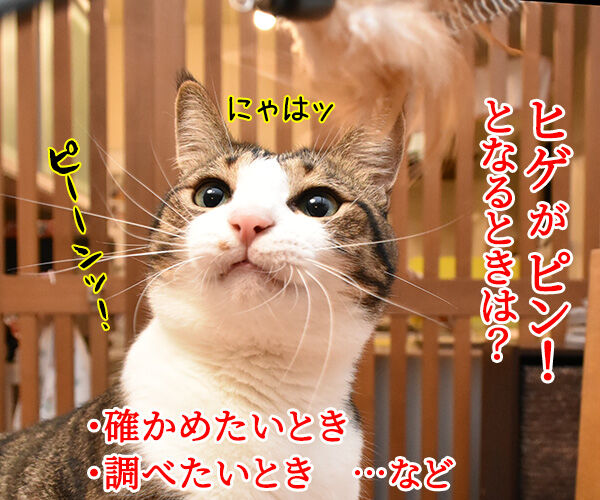猫のピーン!はどんなきもちかしら? 猫の写真で4コマ漫画 2コマ目ッ
