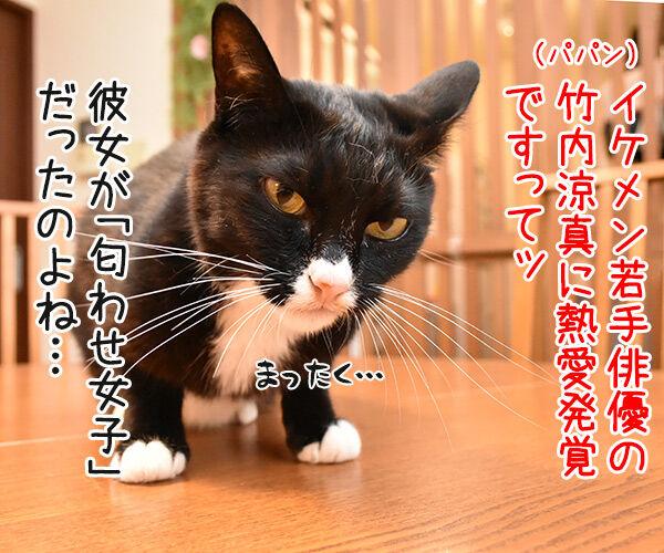 イケメン俳優の竹内涼真さんが匂わせで熱愛発覚なんですってッ 猫の写真で4コマ漫画 1コマ目ッ