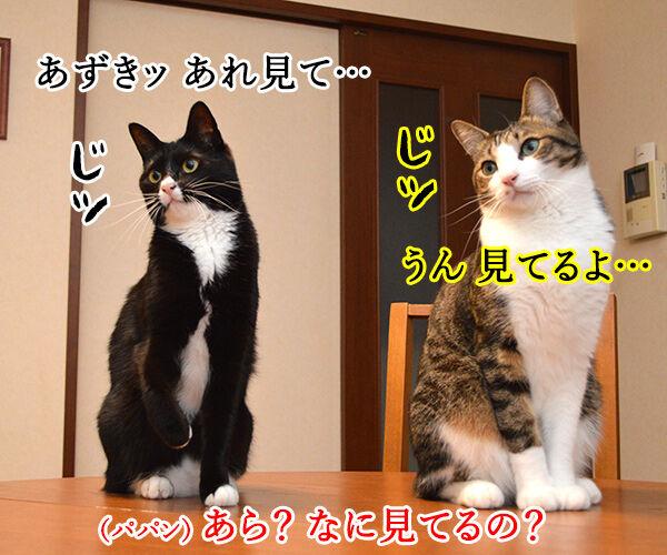 ただいまぁ 其の四 猫の写真で4コマ漫画 2コマ目ッ