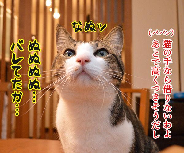 猫の手も借りたいと言うけれど… 猫の写真で4コマ漫画 2コマ目ッ