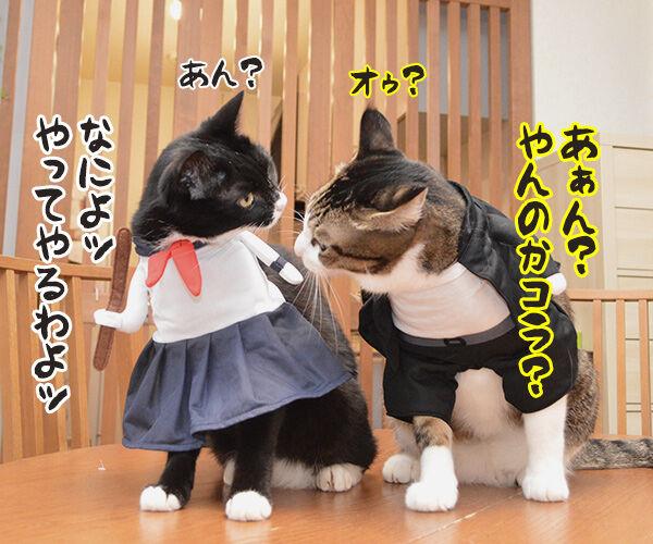 ヤンキーあずきとスケバンだいず 猫の写真で4コマ漫画 3コマ目ッ