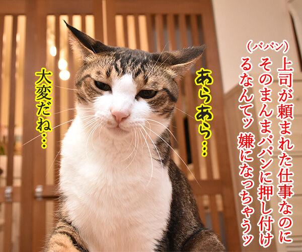 そのまんまパパンになんてイヤイヤーン 猫の写真で4コマ漫画 1コマ目ッ