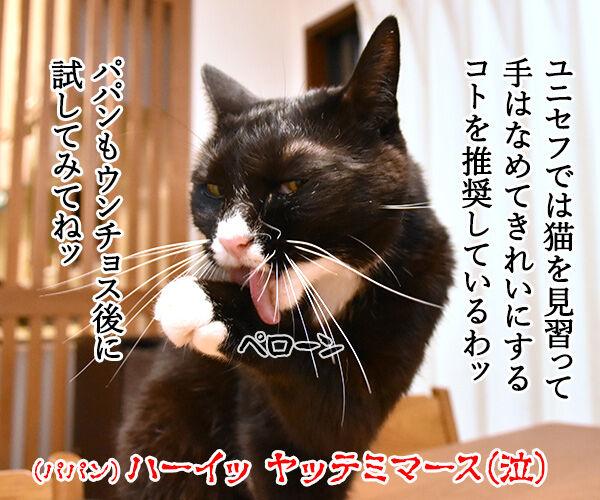 10月15日は『世界手洗いの日』なんですってッ 猫の写真で4コマ漫画 4コマ目ッ
