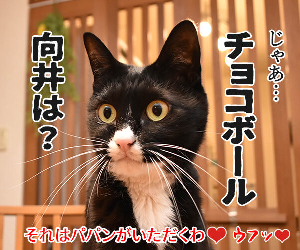 もうすぐバレンタインだから… 猫の写真で4コマ漫画 4コマ目ッ