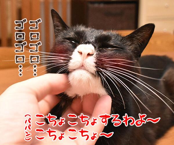こちょこちょ ゴロゴロ 猫の写真で4コマ漫画 1コマ目ッ